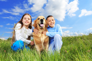 Ian The Dog Trainer can help teach your children to understand how to play safely with your dog.