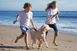 The whole family, including children, should be involved in the caring and training of your dog.