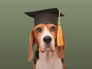 well educated dog m